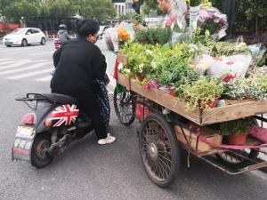 路边卖花的三轮车