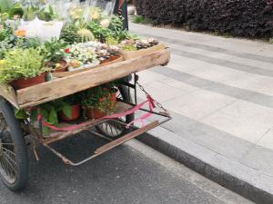 三轮车路边卖花